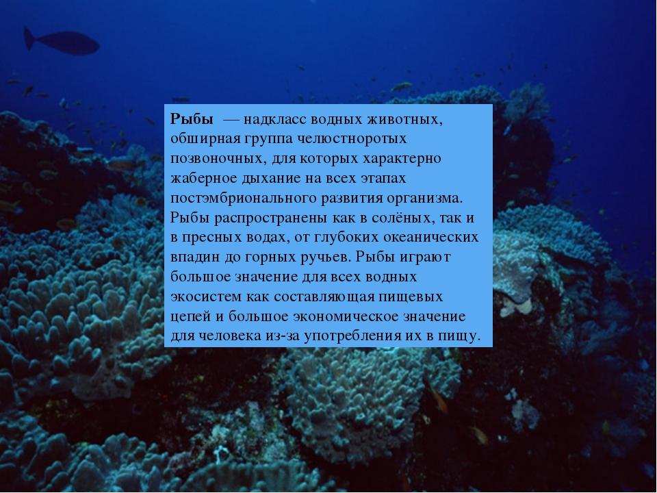 Рыбы — надкласс водных животных, обширная группа челюстноротых позвоночных,...