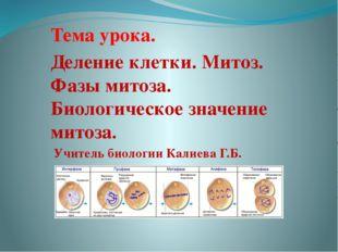 Тема урока. Деление клетки. Митоз. Фазы митоза. Биологическое значение митоз