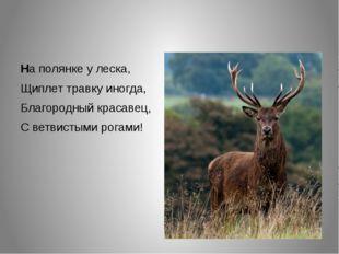 На полянке у леска, Щиплет травку иногда, Благородный красавец, С ветвистыми