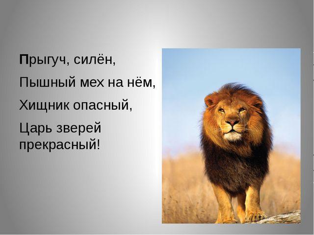 Прыгуч, силён, Пышный мех на нём, Хищник опасный, Царь зверей прекрасный!