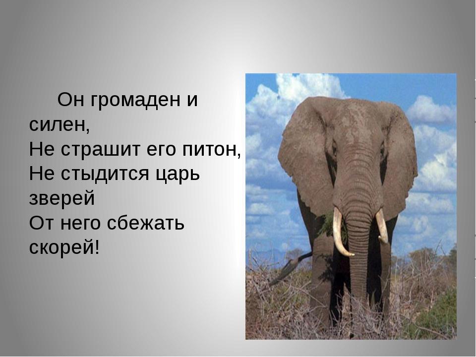 Он громаден и силен, Не страшит его питон, Не стыдится царь зверей От него с...