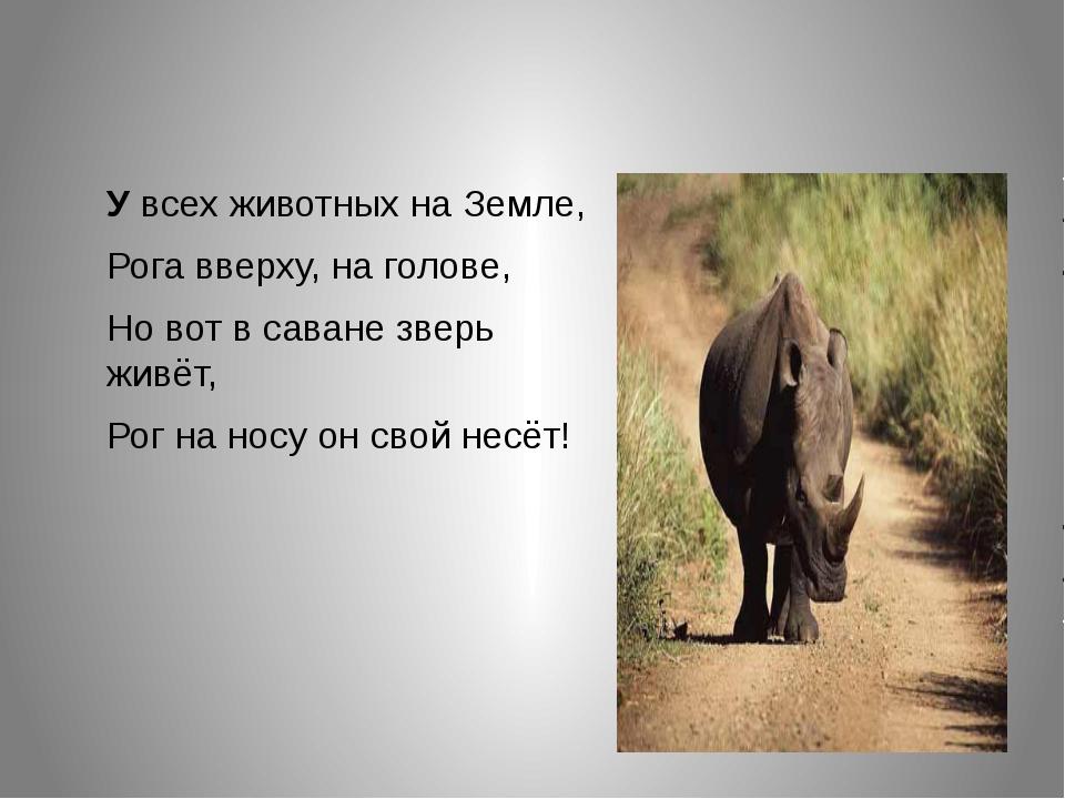 Увсех животных на Земле, Рога вверху, на голове, Но вот в саване зверь живё...