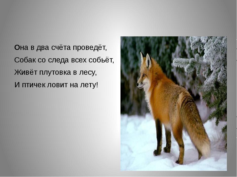 Она в два счёта проведёт, Собак со следа всех собьёт, Живёт плутовка в лесу,...