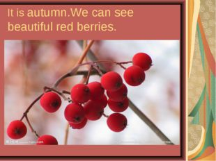 It is autumn.We can see beautiful red berries.