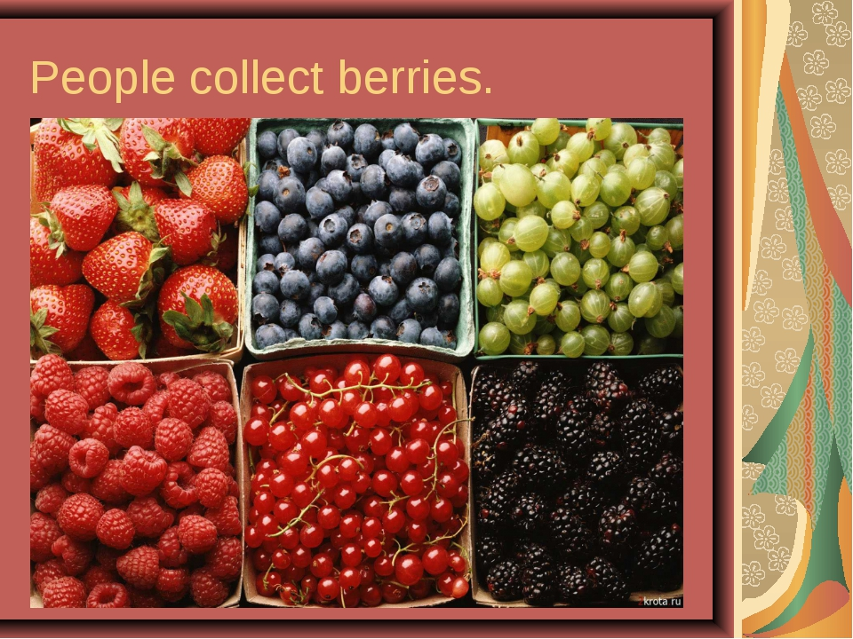 People collect berries.