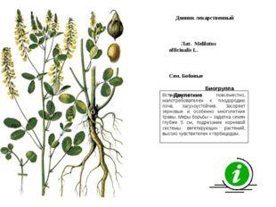 Встречается повсеместно, малотребователен к плодородию почв, засухоустойчив.