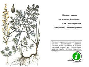 Повсеместно распространенный сорняк с широким экологическим ареалом. Растение