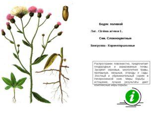 Распространен повсеместно, предпочитает плодородные и аэрированные почвы. Зас