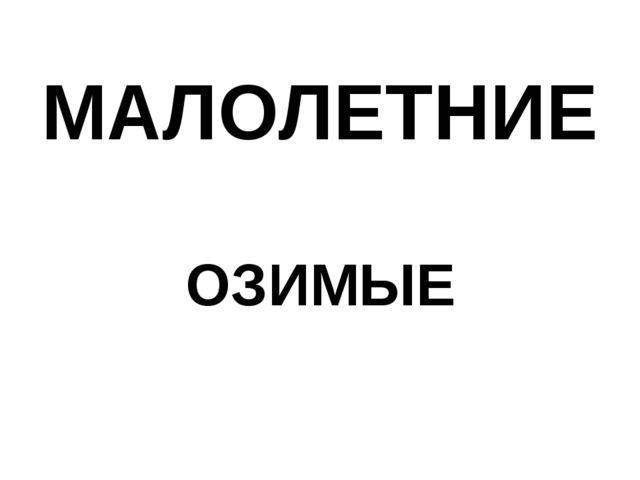 МАЛОЛЕТНИЕ ОЗИМЫЕ