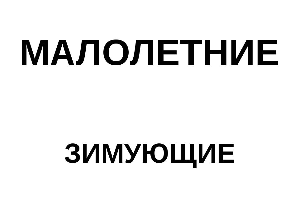 МАЛОЛЕТНИЕ ЗИМУЮЩИЕ