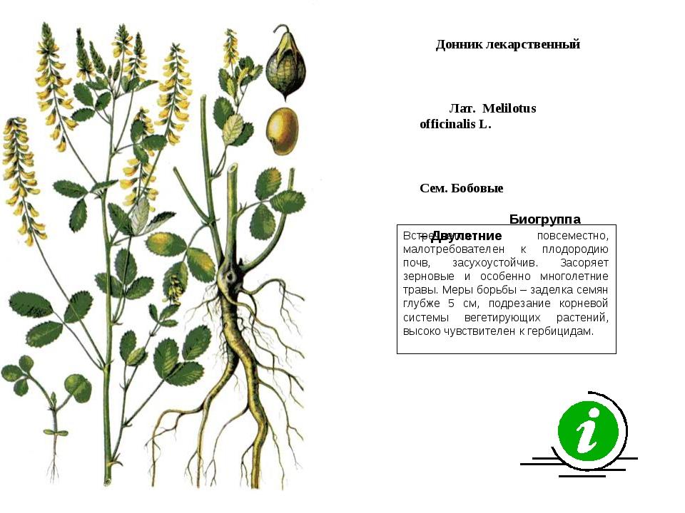 Встречается повсеместно, малотребователен к плодородию почв, засухоустойчив....