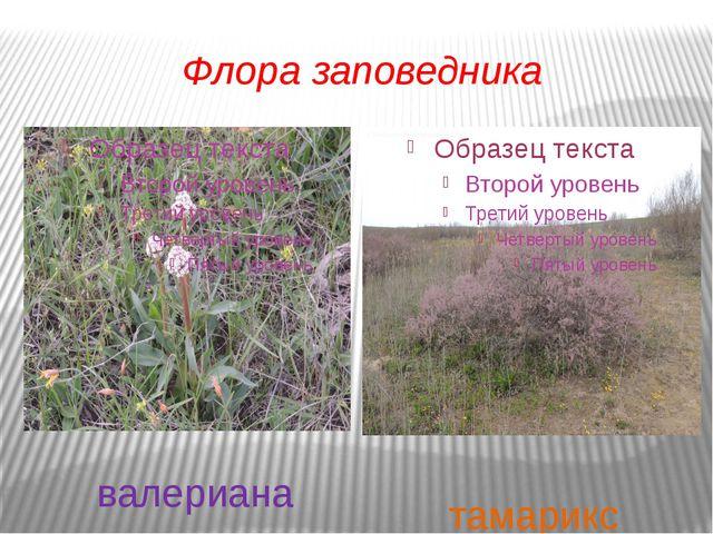 Флора заповедника валериана тамарикс