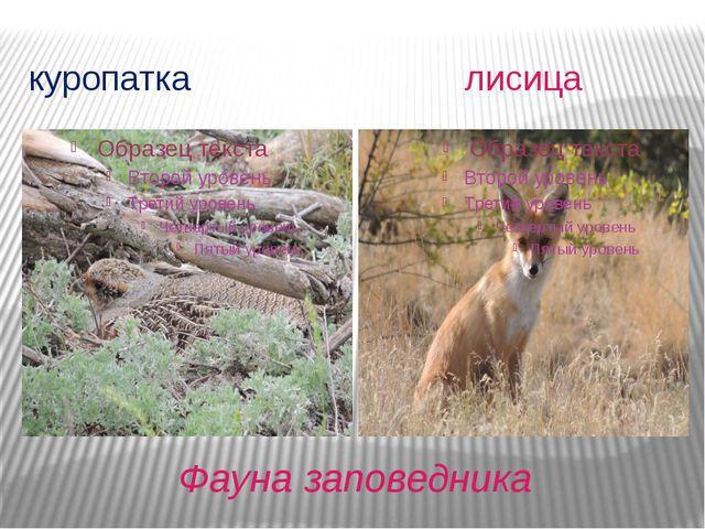 Фауна заповедника куропатка лисица