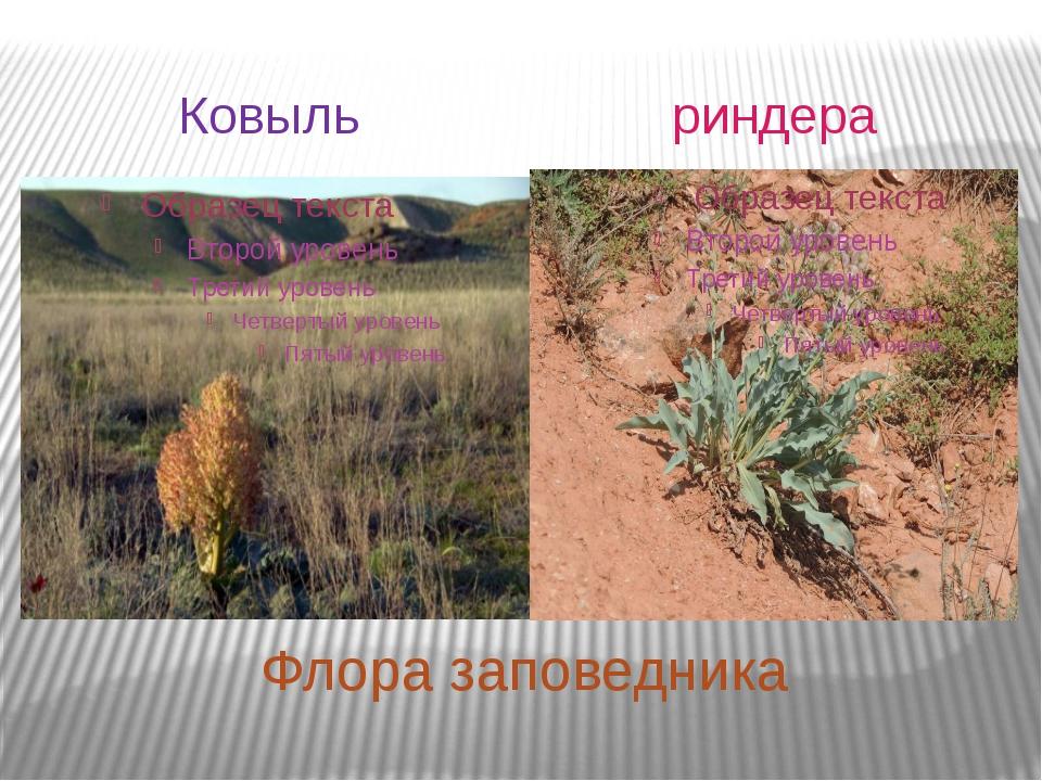 Флора заповедника Ковыль риндера