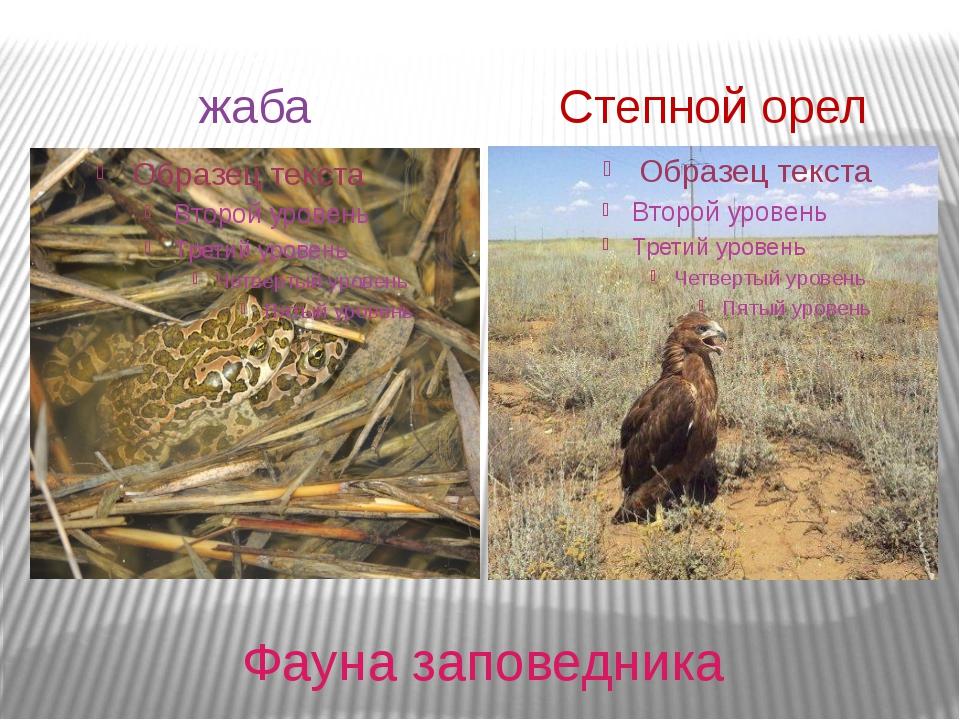 Фауна заповедника жаба Степной орел