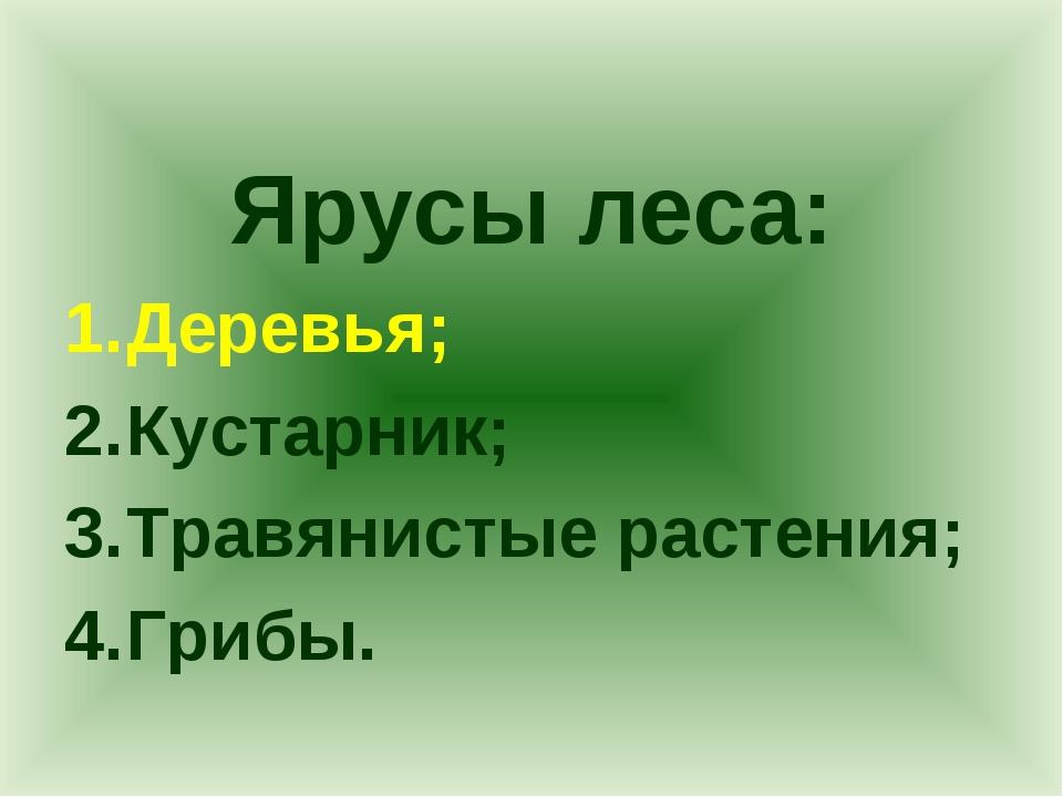 Ярусы леса: Деревья; Кустарник; Травянистые растения; Грибы.