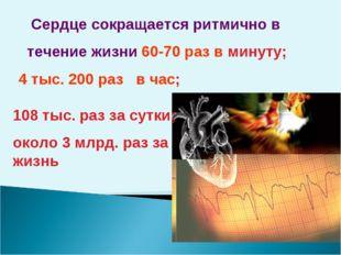Сердце сокращается ритмично в течение жизни 60-70 раз в минуту; 4 тыс. 200 р