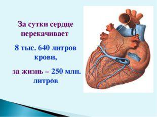 За сутки сердце перекачивает 8 тыс. 640 литров крови, за жизнь – 250 млн. лит