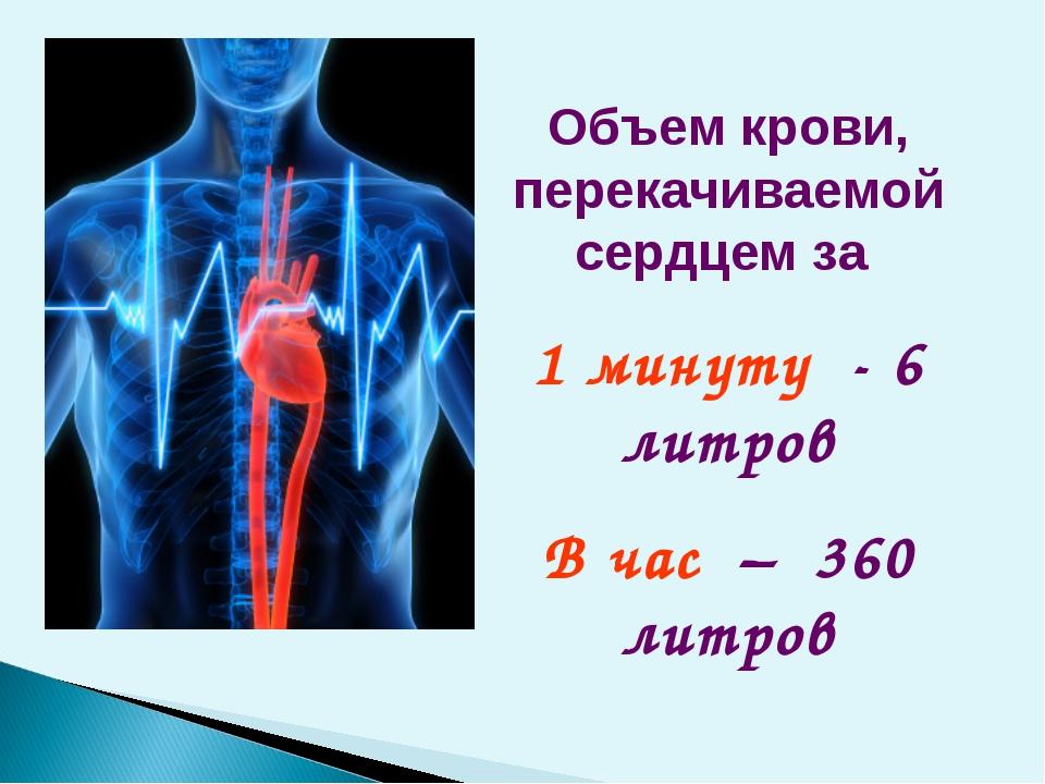 Объем крови, перекачиваемой сердцем за 1 минуту - 6 литров В час – 360 литров