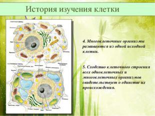 4. Многоклеточные организмы развиваются из одной исходной клетки. 5. Сходство