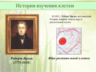 В 1831 г. Роберт Броун, шотландский ботаник, впервые описал ядро в раститель