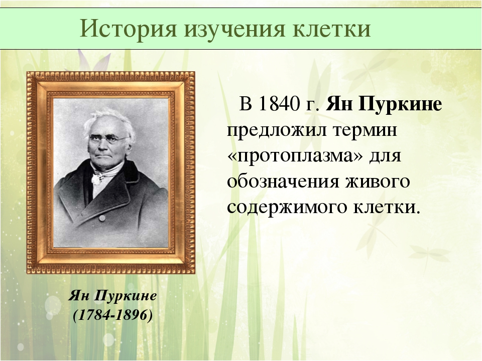 Ян Пуркине (1784-1896) В 1840 г. Ян Пуркине предложил термин «протоплазма» дл...