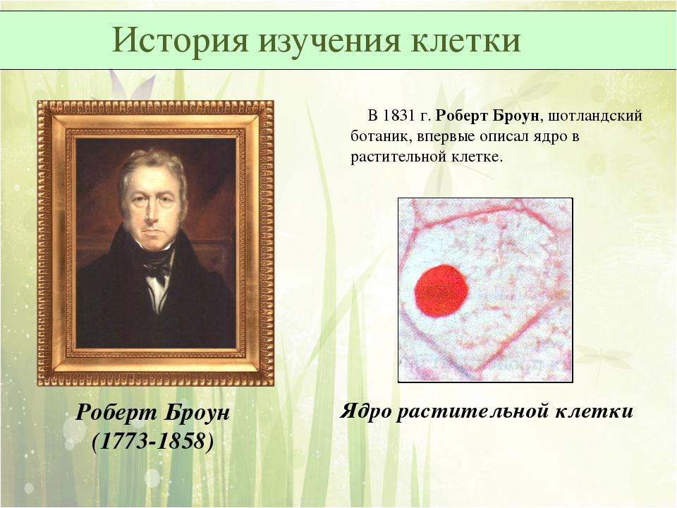 В 1831 г. Роберт Броун, шотландский ботаник, впервые описал ядро в раститель...