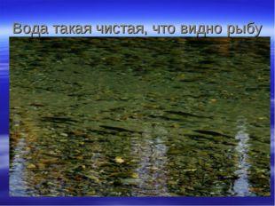 Вода такая чистая, что видно рыбу