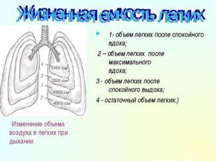 . Изменение объема воздуха в легких при дыхании 1- объем легких после спокойн