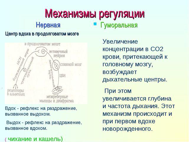 Механизмы регуляции Нервная Центр вдоха в продолговатом мозге Гуморальная - В...