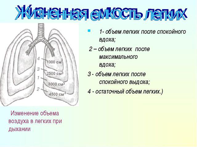 . Изменение объема воздуха в легких при дыхании 1- объем легких после спокойн...