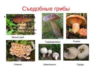 Съедобные грибы Белый гриб Рыжик Подберезовик Опенок Груздь Шампиньон
