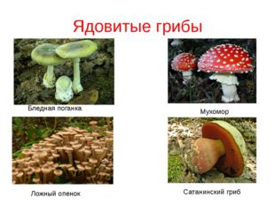 Ядовитые грибы Бледная поганка Мухомор Ложный опенок Сатанинский гриб