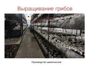 Выращивание грибов Производство шампиньонов