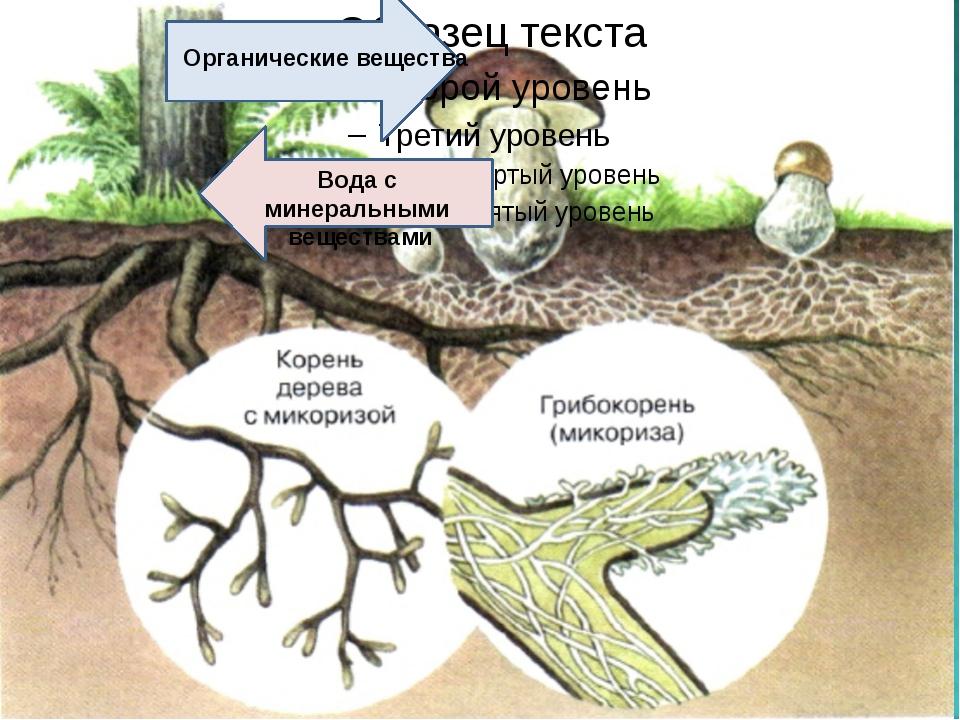 Органические вещества Вода с минеральными веществами