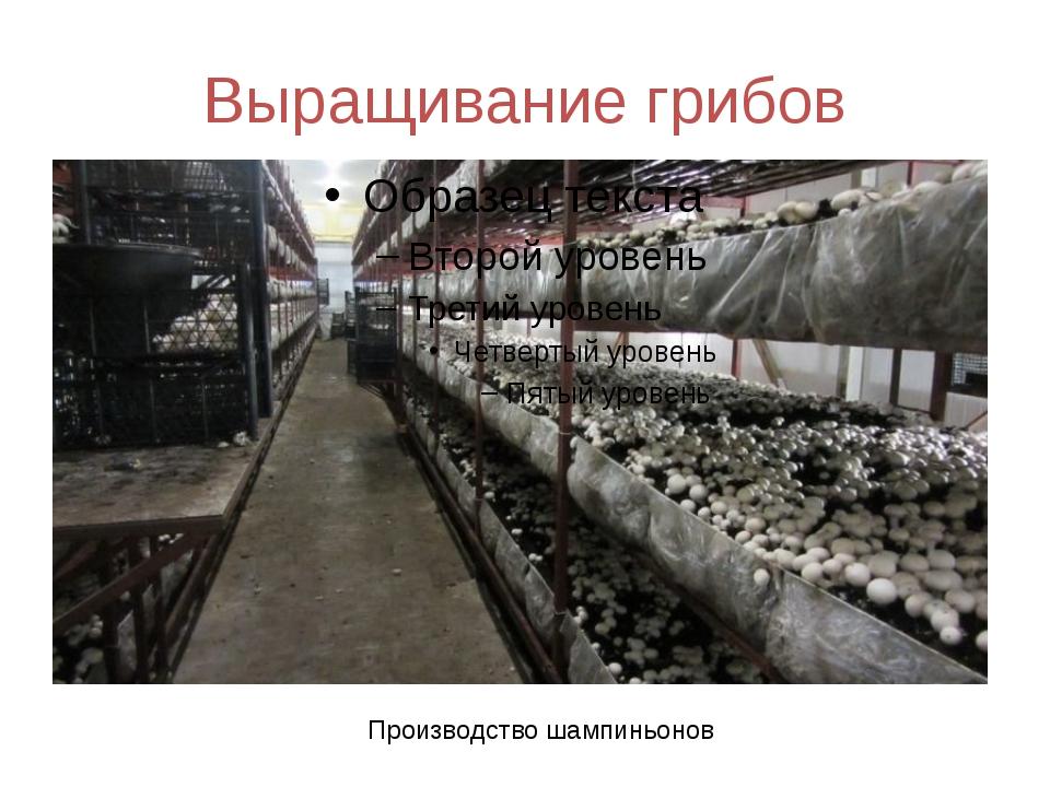Для выращивание грибов шампиньонов 6