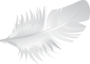 http://www.pnbst.maori.nz/themes/main/images/Footer-Feather.png