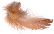 http://4.bp.blogspot.com/_yrwNUQhoKIo/S-IfdelSHBI/AAAAAAAAAxk/JKyfoOEbJi0/s1600/feather+3.png