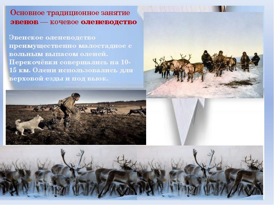 Основное традиционное занятие эвенов — кочевое оленеводство Эвенское оленевод...