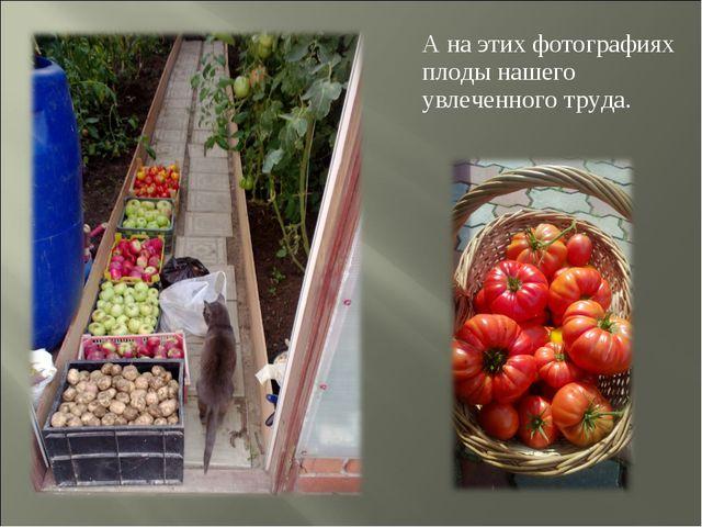 А на этих фотографиях плоды нашего увлеченного труда.