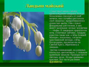 Ландыш майский Существует много легенд происхождения ландыша. Когда Белоснеж