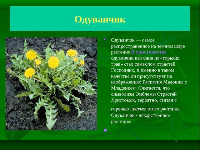 Одуванчик Одуванчик— самое распространенное на земном шаре растение В христи...