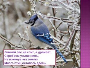 Зимний лес не спит, а дремлет, Серебром унизан весь, Не покинув эту землю, Мн