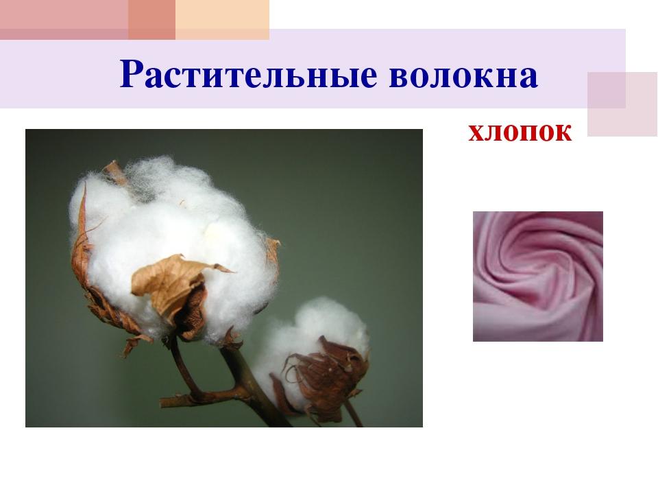Растительные волокна хлопок