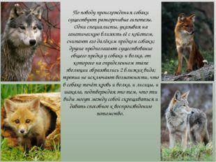 По поводу происхождения собаки существуют разноречивые гипотезы. Одни специа