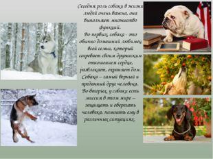 Сегодня роль собаки в жизни людей очень важна, она выполняет множество функци