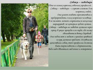 Собаки – поводыри Одна из самых нужных собачьих профессий. Собаки – поводыри