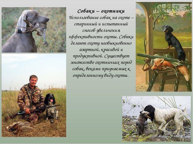 Собаки – охотники Использование собак на охоте – старинный и испытанный спос...