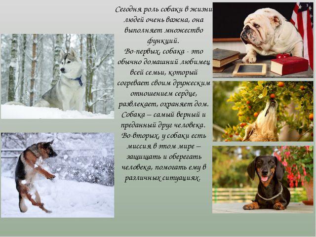 Сегодня роль собаки в жизни людей очень важна, она выполняет множество функци...