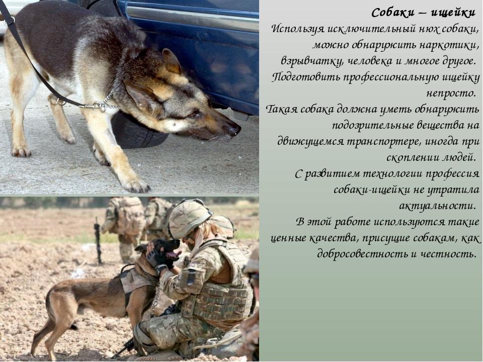 Собаки – ищейки Используя исключительный нюх собаки, можно обнаружить наркот...